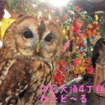 大須で動物たちと触れ合える!「ふくろうカフェわたどーる」【矢場町・上前津】