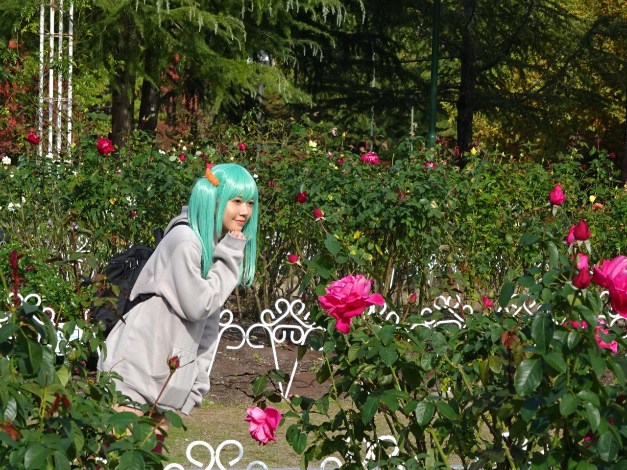 鶴舞公園薔薇園