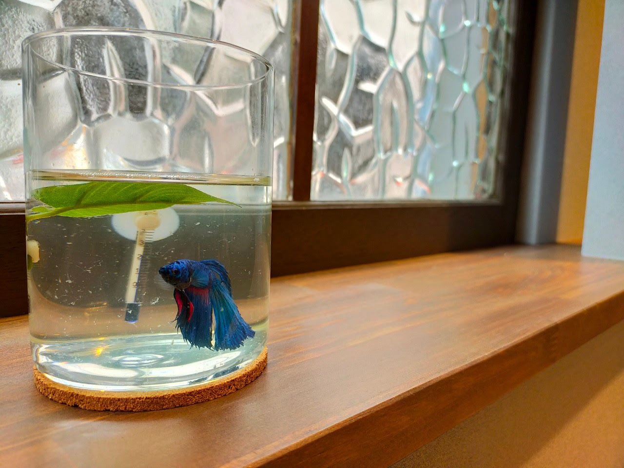 熱帯魚ベタ